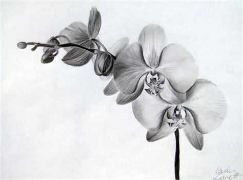 orchid by zeroxy92 on deviantart