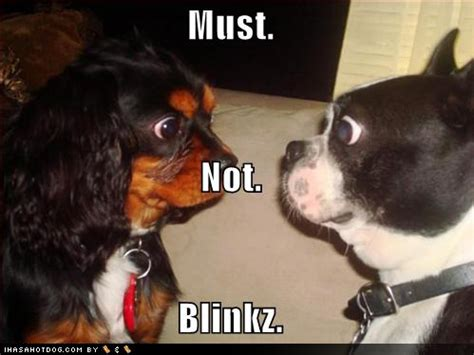funny wallpapers|hd wallpapers: funny dogs