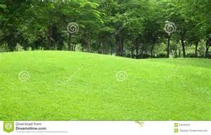 beautiful sloping backyard with grass and tree in stock