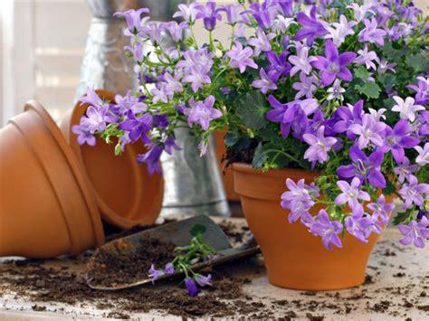 Growing Flowers In Pots Tips For Beginners Boldsky Com Flower Gardening In Pots