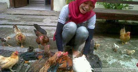 Jual Bibit Ayam Petelur Jakarta analisa usaha ternak ayam kung doc