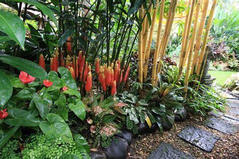 Bamboo Garden Midland Mi by Hundscheidt Garden Brisbane Gingers And Bamboo Gardens