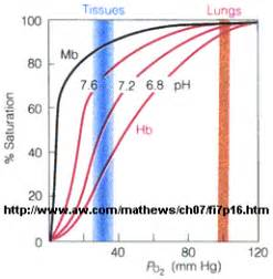 bohr effect diagram add your page title