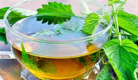 Does Detox Tea Work Yahoo by 4 Amazing Nettle Tea Benefits