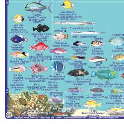 Pin Hawaii Reef Fish Chart on Pinterest
