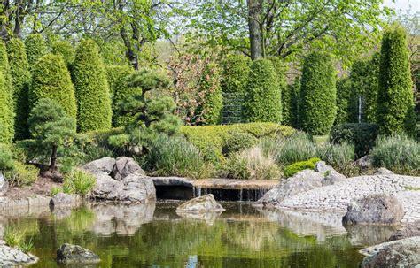 japanse tuin planten kopen download japanse tuin die bij een vijver planten stock
