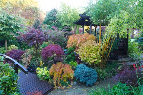 Japanese Maple Garden by Autumn Japanese Maple Colours In Our West Midlands Garden