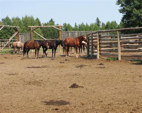 las fotos m 225 s de corrales en instagram caballos rancho fotos de archivo imagen 9643323