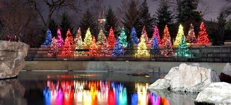 lights at the zoo chicago get a dose of with zoo lights drive