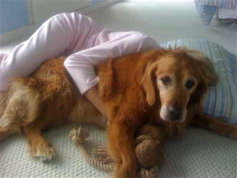 osteosarcoma in dogs leg bone cancer