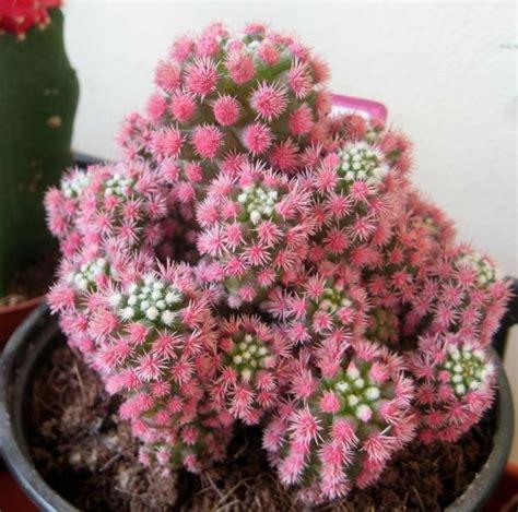 flores de cactus y suculentas plantas