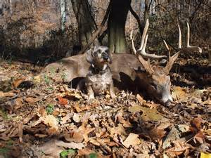 Fotos deer hunting dogs for sale
