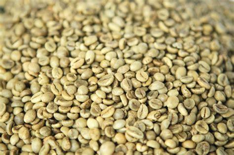 Xo Coffee Robusta c 224 ph 234 việt nam c 243 gi 225 cộng 40 usd tấn so với gi 225 tại