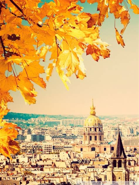 paris autumn tree ultra hd desktop background wallpaper