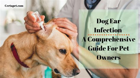 dog ear infection  comprehensive guide  pet owners
