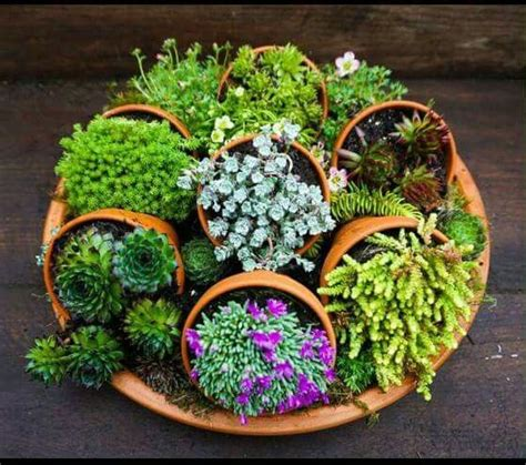 dish garden ideas best 25 dish garden ideas on diy terrarium