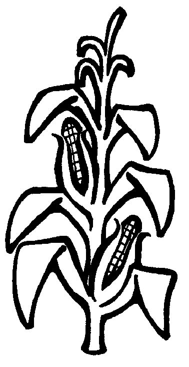 Corn Stalk Template corn stalk clipart best