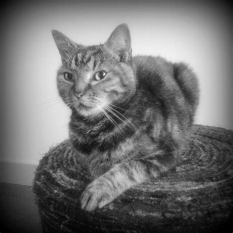 Cat Black Stool by Cat On A Stool We It Black And White Cat