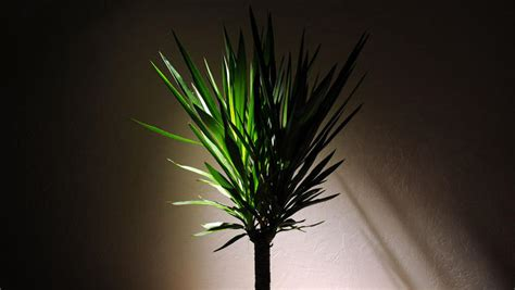 plants that grow in complete darkness 5 houseplants that thrive in dark apartments