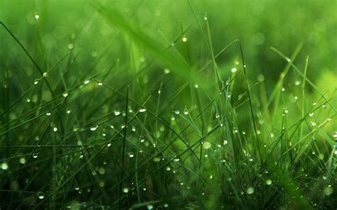 green grass wallpaper green nature wallpapers hd pictures one hd wallpaper