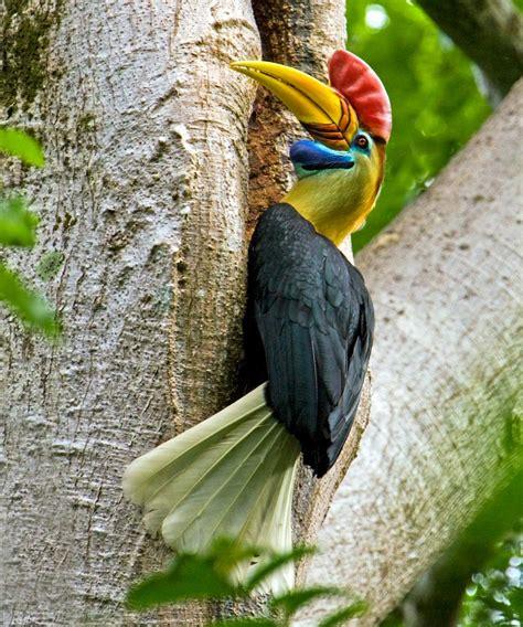 sulawesi a birder 180 s