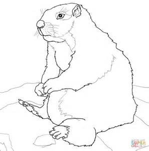 ground squirrel coloring page arctic ground squirrel coloring page coloring pages