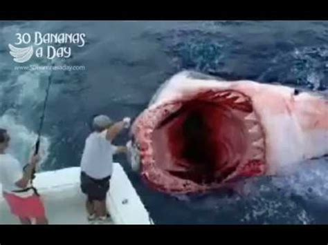 megalodon shark attacks boat megalodon shark attack boat off florida coast youtube