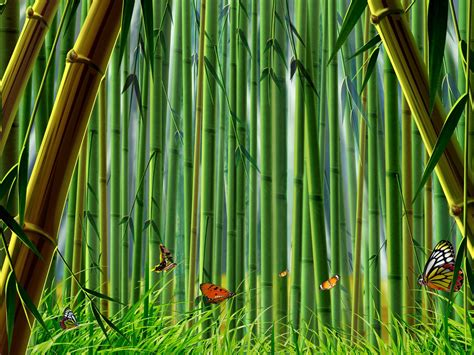 Bamboo Herbal bamboo wallpaper bamboo wallpapers collection 20 30