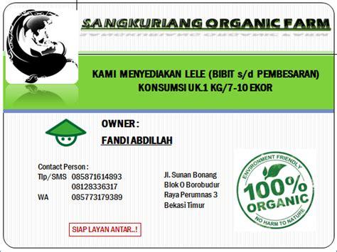 Bibit Lele Sangkuriang Di Bekasi jual bibit konsumsi lele sangkuriang sangkuriang organic