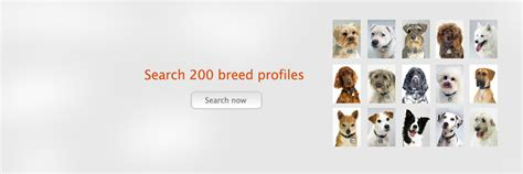 a to z finding a pet for me books a z list of breeds breed info noah s dogs