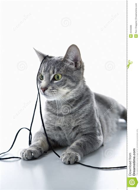 String Cat - cat with string royalty free stock image image