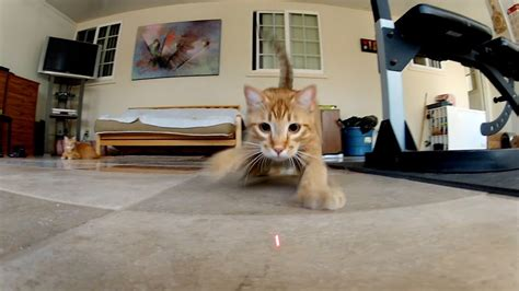 gopro laser cats tv commercial youtube