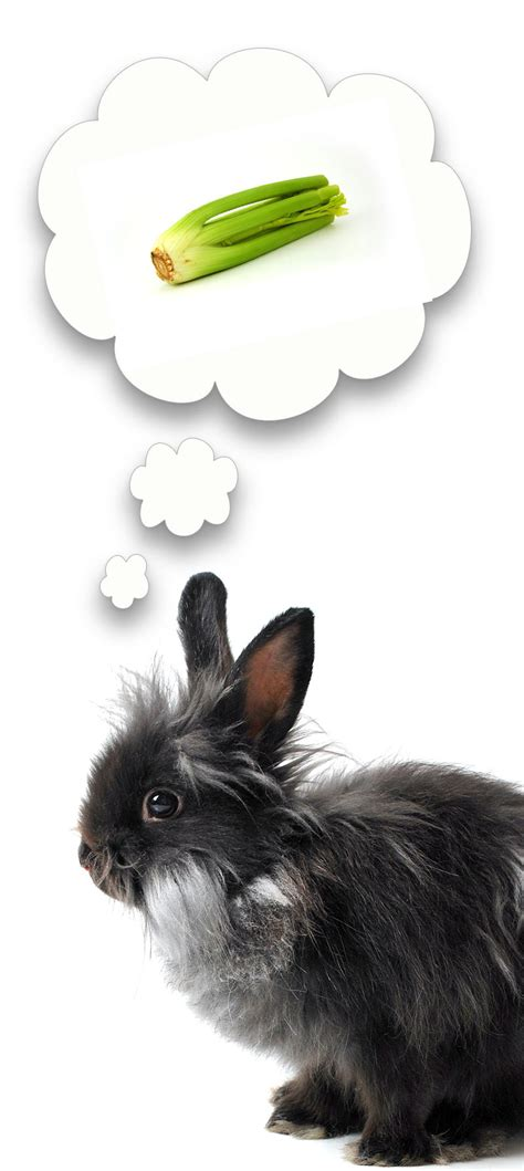 can a eat celery can rabbits eat celery a small pet food safety guide