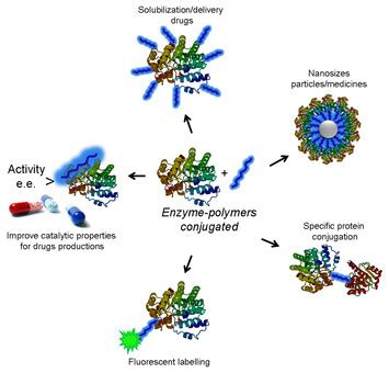 novel enzyme polymer conjugates for biotechnological