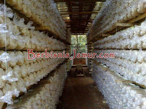 jamur untuk membuat yoghurt membuat kumbung jamur tiram berbisnis jamur