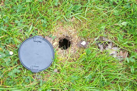 ratti in giardino fori di forum natura mediterraneo forum naturalistico