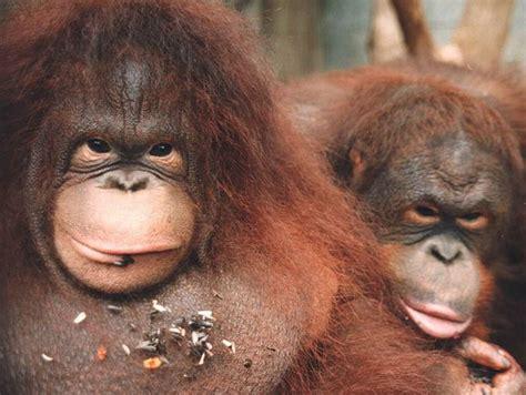 imagenes asombrosas y graciosas de animales fotos curiosas y graciosas de animales taringa