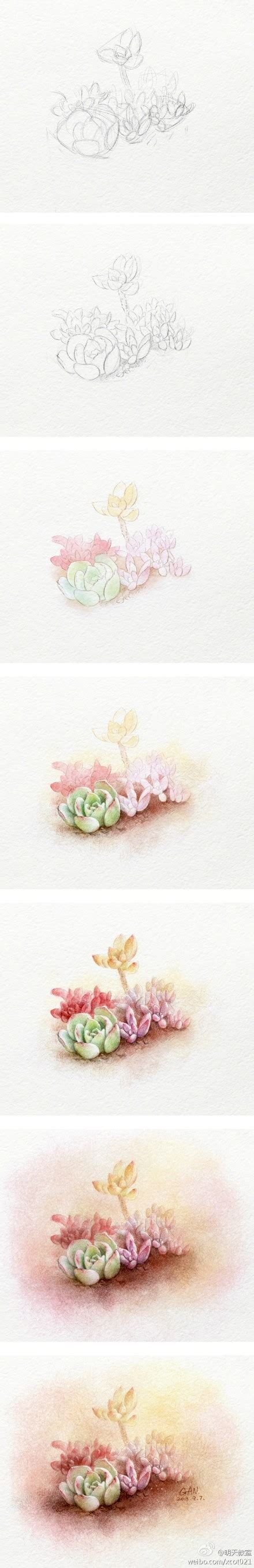 tutorial watercolor pencils colored pencil drawing of succulents step by step