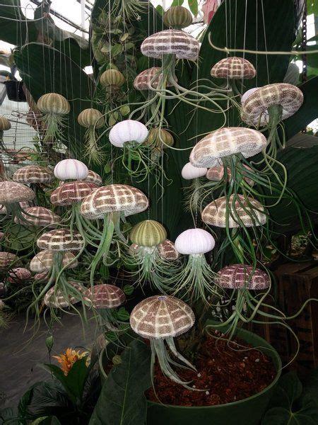 tilandsia jelly fish garden globes plants cool plants
