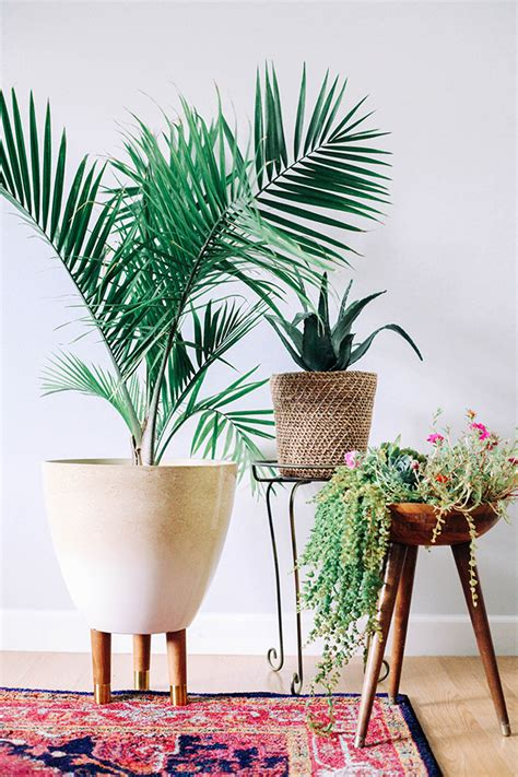 fixer upper friday 5 pretty houseplants that improve air quality arsenic old place