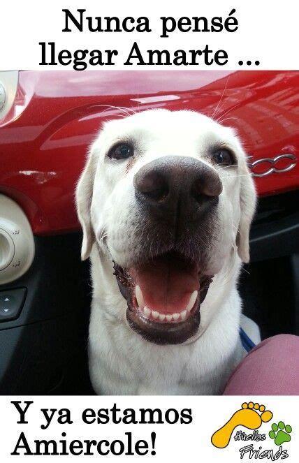 imagenes de amor graciosas de animales imagenes graciosas de perros con frases imagenes de perros