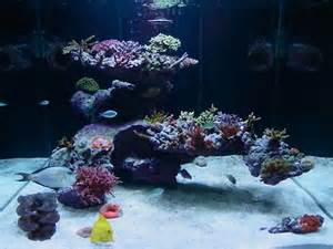 reefscape uncertainty aquascaping forum nano reef