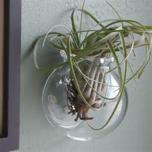 wall mounted glass globe for air plants or a by fullblownglass