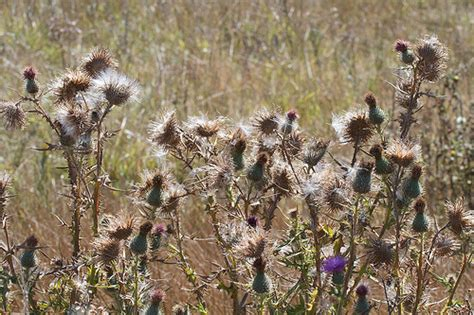 cool thistle bird seed images birds tips collection blog