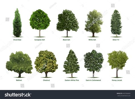 type of tree beautiful types of trees by stock vector tree types sorts