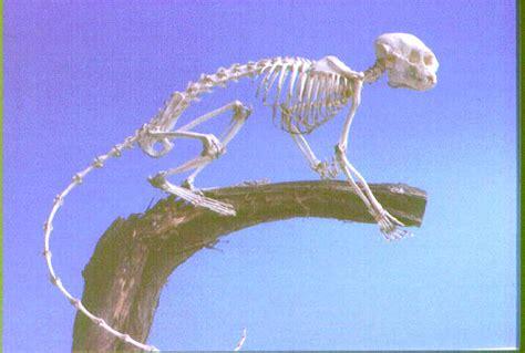 scoiattolo volante domestico panthera pardus leopardo felis tigrina tigrillo martes
