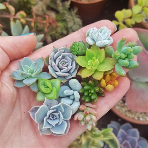 succulent arrangement  easy