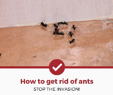 best way to get rid of ants in bathroom how to get rid of ants complete guide