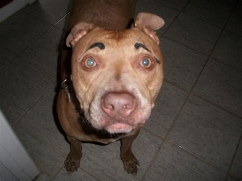 dogs with eyebrows with eyebrows dogs with eyebrows