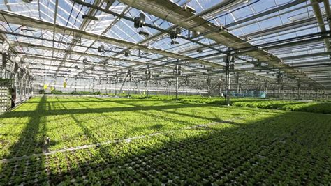 Big Greenhouses by Image Gallery Large Greenhouse